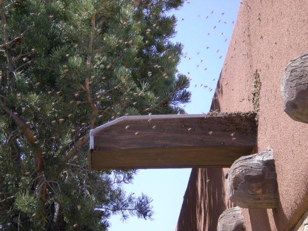 Bee Swarm 2014-04