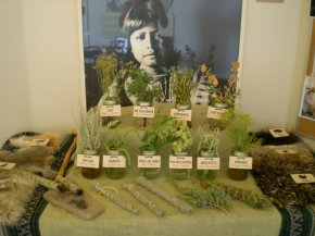 Medicinal Plants ofKuaua