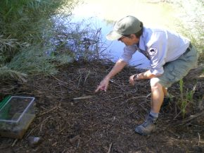 Releasing the Toads