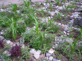 Gardens Growing Wild