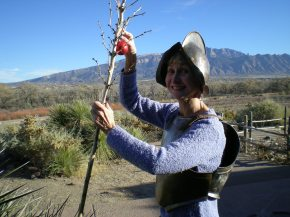 December 6: When Decorating Yucca, Wear Armor!