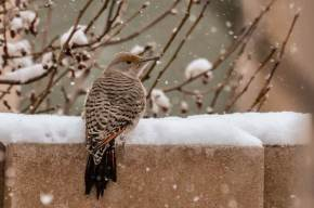 Flicker in Winter