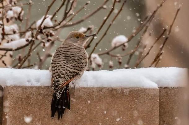 Flicker in Winter