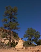 rock, trees