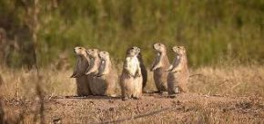 Prairie Dog Pals!